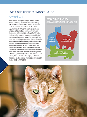 Managing Community Cats: Why Are There So Many Cats?