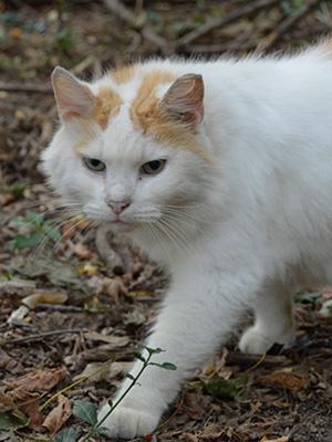 community cat