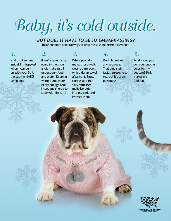 Baby It S Cold Outside Animal