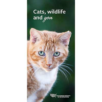Cats, wildlife and you cover