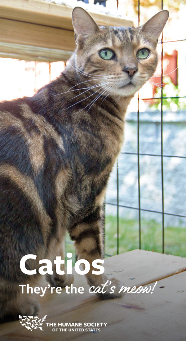 Catios – they're the cat's meow!