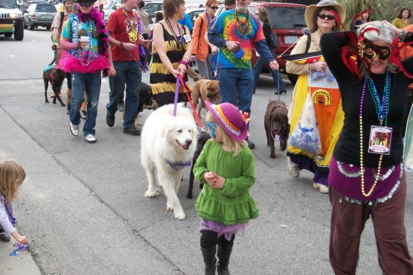 Columbia Animal Services superintendent Marli Drum says her shelter's partnership with the Animal Mission is working, as the shelter's intake and euthanasia rates are on track to go down for the third year in a row. A Mardi Gras/Dog Parade event benefiting the Animal Mission took place in February.