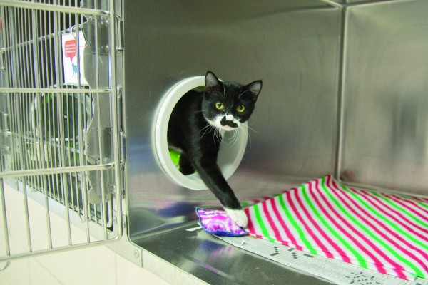 At the Animal Humane Society in Minnesota, portals between adjacent cages give resident felines double the space, making for healthier, happier, more adoptable animals.
