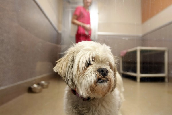 Shelters are rightly centered on caring for their animals. But according to Steven Rogelberg, who heads the Shelter Diagnostic System, if you want your organization to be more effective, you have to bring the staff needs into focus as well.