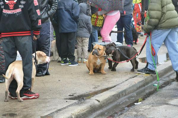 Chicago residents line up for a Pets for Life (PFL) community event. PFL brings spay/neuter services, vaccination clinics, training classes and other resources to underserved communities across the country.
