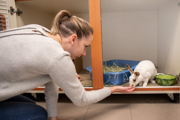 Chelsea Jones, communications specialist at the Animal Welfare League of Arlington, offers a treat to Lis.