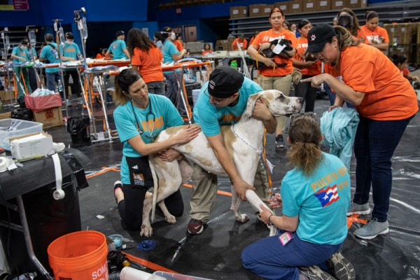 More than two dozen organizations are working together to provide free spay/neuter services and vaccinations to thousands of pets in Puerto Rico.
