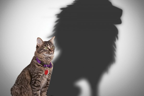 Rescue groups that try to function without strong leadership and business-savvy practices may find that getting things done is like, well, herding cats. Someone has to lead the pride.