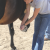 The center treats a variety of medical problems—from starvation to joint injuries—to prepare its equines for adoption. Here, Hillman tends to a horse's hoof.