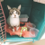To reduce cats' stress during transport, Second Chance Animal Services in Massachusetts recommends filling their crates with familiar items.
