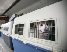 There's a long flight ahead for these dogs leaving Seoul, but they'll find kindness—and new homes—at the end of it.