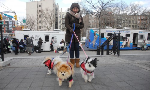 Spay Day events in 2011 included The HSUS teaming with the ASPCA and the Mayor's Alliance for NYC's Animals to provide free spay/neuter, cat and dog food, vaccinations, and microchips to pet owners in Manhattan's Lower East Side.
