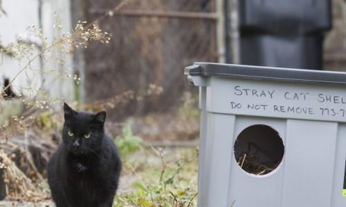 stray cat standing near shelter