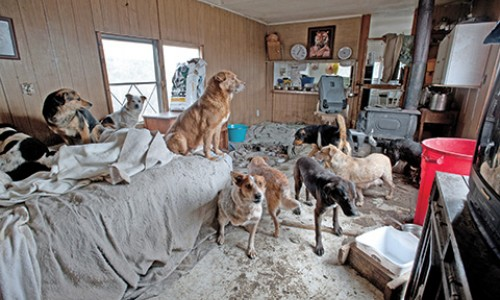 Taking on a major hoarding case can stretch a shelter's staff and its budget. Planning for the costs will help your agency go in prepared.