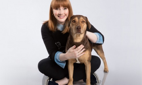 In A Dog's Way Home, Bella (played by Shelby) gets her voice from Bryce Dallas Howard. Shelby and several other dogs in the film are adopted pets.