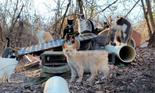 In Virginia, a complex hoarding situation led to the founding of Operation Hood, a feline rescue and trap-neuter-return nonprofit.