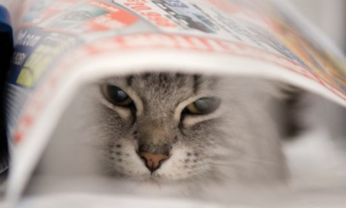 If you have a particularly shy kitty, it's helpful to provide her with a nice hiding space where she can retreat while you tidy up.