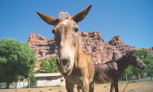 The people and horses of Supai live in one of the most remote places in the country. That's created challenges for the animals' care—but a group of equine experts recruited by The HSUS is trying to help.