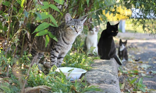 There are 61 square miles of land to the District of Columbia—and an unknown number of outdoor cats.