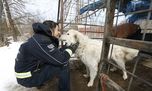 In 2015, local law enforcement and the HSUS rescued more than 50 Great Pyrenees from an Arkansas puppy mill.