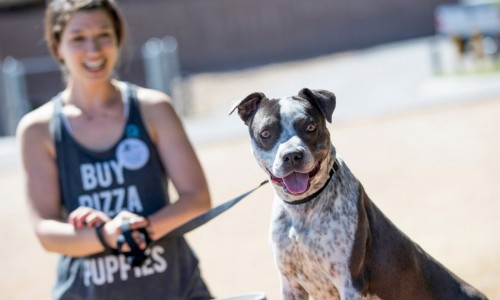Apprentice trainee Sarah Brasky, founder of Foster Dogs, Inc., in New York City, takes Dakota for a stroll at the Pima Animal Care Center.