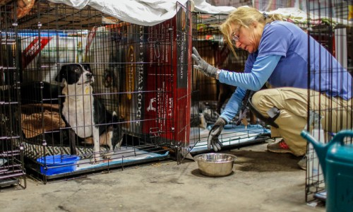 Carol Misseldine of the Humane Society of the United States helps staff an emergency shelter for animals displaced by the 2018 wildfires in California.