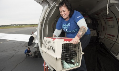 Kate Schrader with the Humane Society of the United States assists with the transport of around 120 dogs and cats who flew from shelters in Texas and Oklahoma to Virginia.