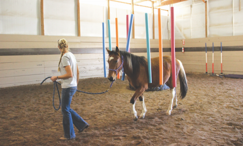 Taryn Hillman, an administrative assistant at the Dumb Friends League Harmony Equine Center, leads a horse through a training exercise.