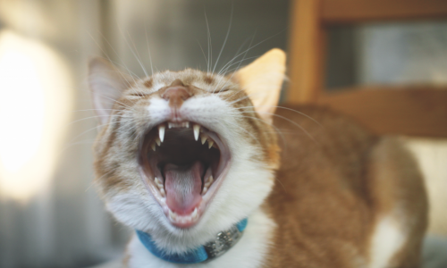 "Cats won't open up and say ""ah"" when they've got a toothache."