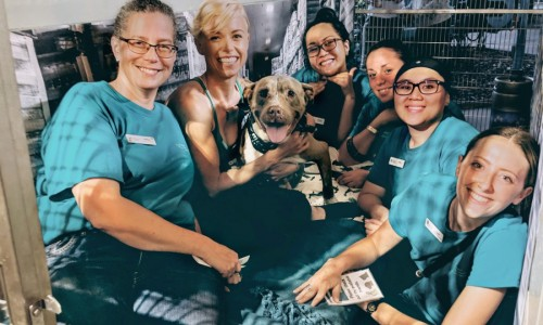 Maui Humane Society's Spring Fling Slumber Party had community members, staffers and volunteers sleeping, singing and performing challenges in the kennels with the dogs.
