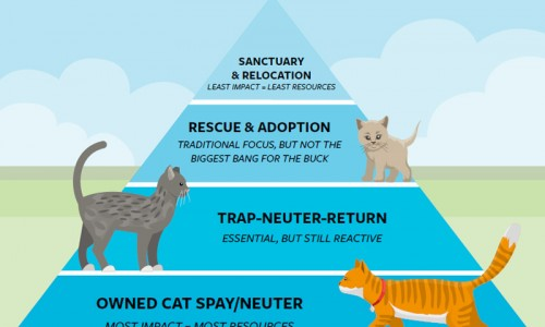 Inspired by diagrams for healthy diets, the community cat pyramid encourages a holistic approach to cat management and a strategic use of resources.