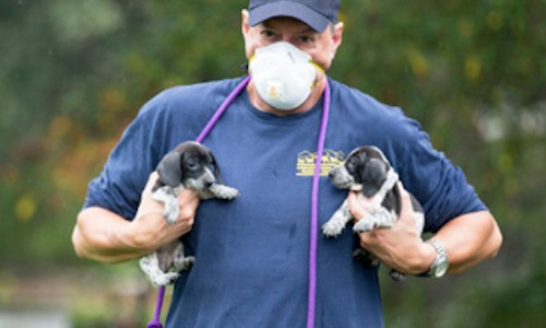 David Stroud with the Cashiers-Highlands Humane Society in North Carolina removes pups from a breeding mill several hours from his shelter. Many shelter and rescue partners cross county or state lines to assist in large rescues.