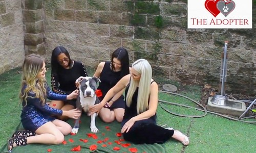 The ladies of Front Street Animal Shelter vie for handsome Colton's affections.