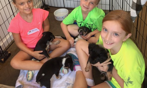 Children at the Collierville Animal Services Humane Education Kids Camp in Tennessee learn the do's and don'ts of getting acquainted with young pups.