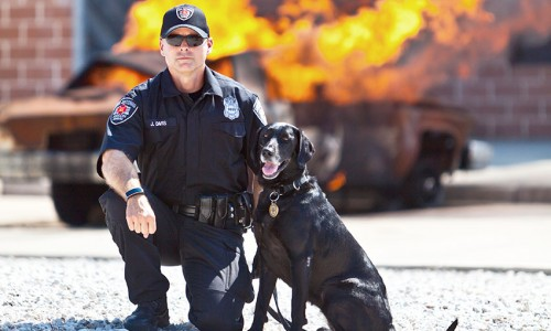 Justin Davis, a K-9 handler for the city arson bureau in San Antonio, Texas, says his former shelter dog Kai is a bundle of energy who's found a great outlet in arson investigation.