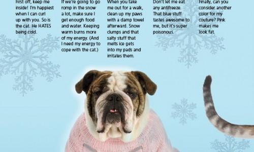 <em>Animal Sheltering</em> magazine January/February 2012