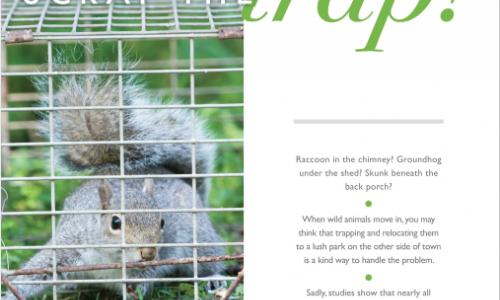 <em>Animal Sheltering</em> magazine Summer 2018