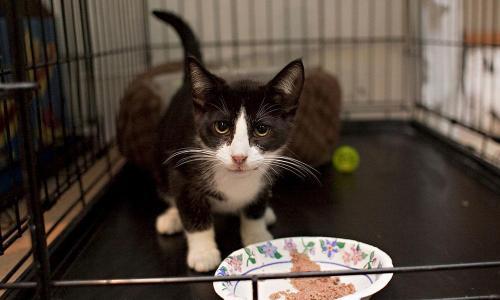 kitten eating in her crate
