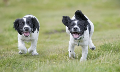 Dogs running together outside