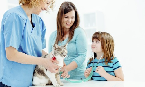 Cat and family with veterinarian