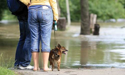 You won't always know when fires or floods will strike, but having a plan in place will help you and your animals get ahead of the weather.